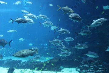 aquarium-568689_960_720