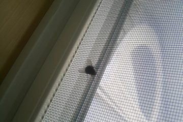 common-house-fly-on-screen-of-window