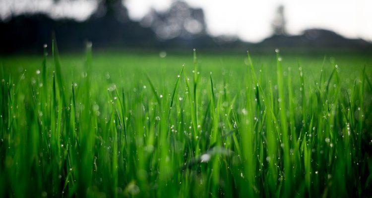 Gras In Tuin : De invloed van je gazon op het milieu u stiga magazine